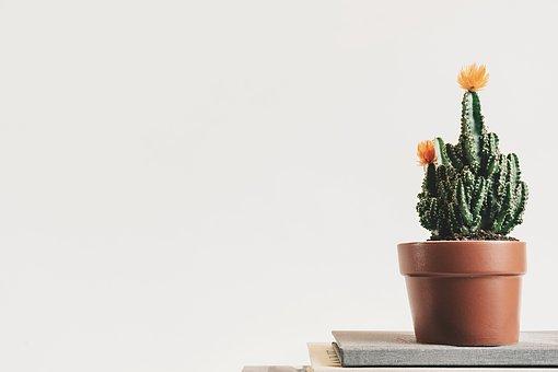 Bien choisir le terreau pour ses plantes d'intérieur